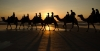 cable_beach_camels_at_sunset_1250