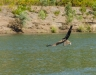 Escaping with the catch - Ord River
