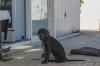 Dog, Porto San Giorgio