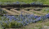 Original garden beds Roman Forum