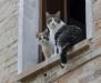 Cats, Torre di Palme, Le Marche