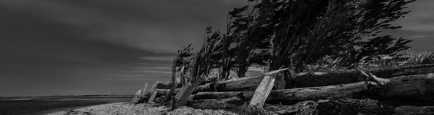 Windblown, protected – Fortrose NZ